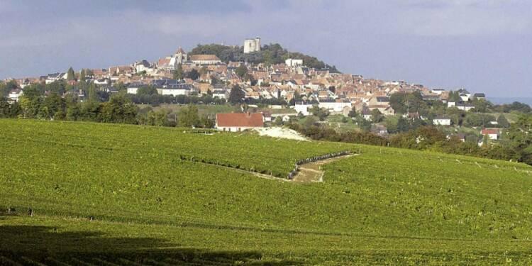 Rififi dans le Sancerre: arrachage sauvage de 5.600 pieds de vigne