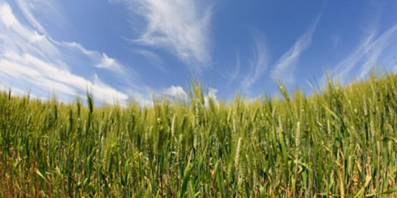 Le blé, ce produit made in France qui cartonne mais dont on ne parle jamais