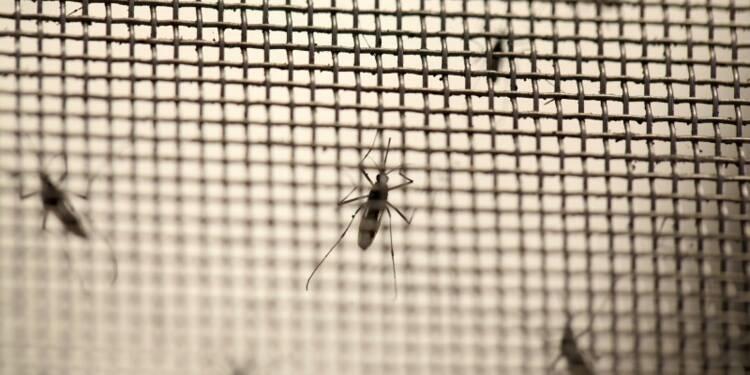 Pour l'OMS, le virus Zika pourrait s'étendre à l'Europe cet été