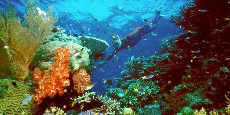 Une partie de la Grande barrière de corail serait mourante