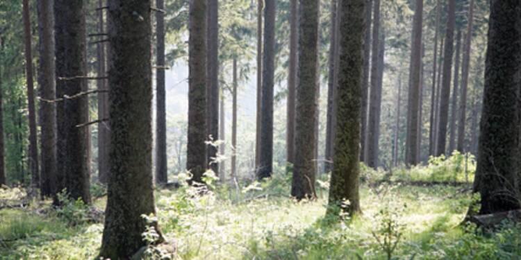 Investir dans les forêts, un faible rendement mais une fiscalité dorée