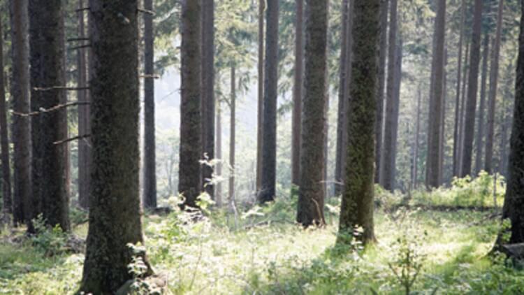 La forêt : un placement d'avenir à la fiscalité avantageuse