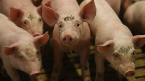 Crise porcine: Le Foll espère des avancées rapides en Europe