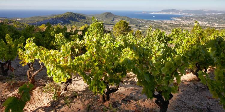 Frais, désaltérants, fruités : découvrez notre sélection de vins d'été !