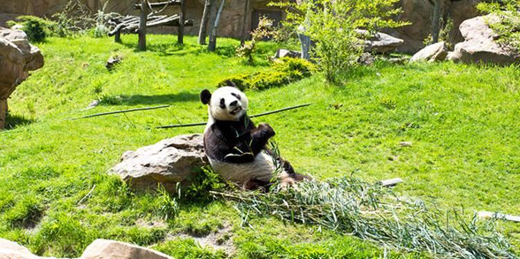 Zoo de beauval son budget repas 1 million d 39 euros par for Appart hotel zoo de beauval