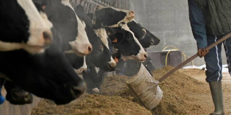 Près de 10% des élevages au bord du dépôt de bilan, dit Le Foll