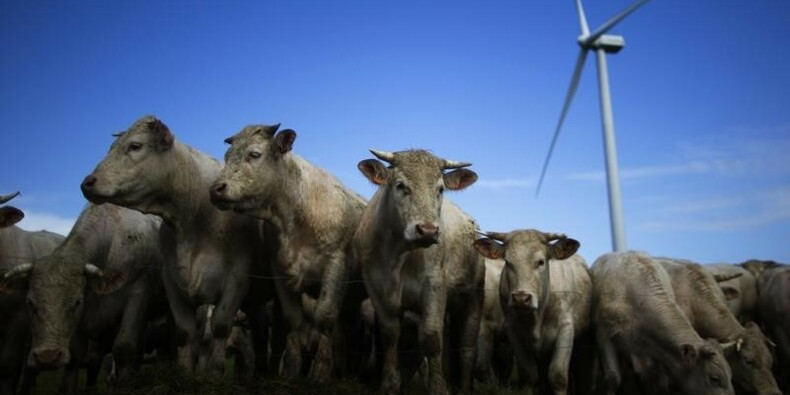 Les éleveurs bovins mobilisés contre la chute des prix