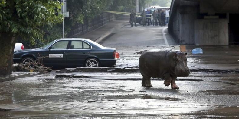 Des animaux sauvages dans les rues inondées de Tbilissi