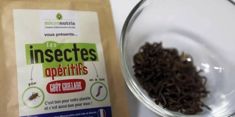 Micronutris, leader européen des insectes comestibles, lève des fonds