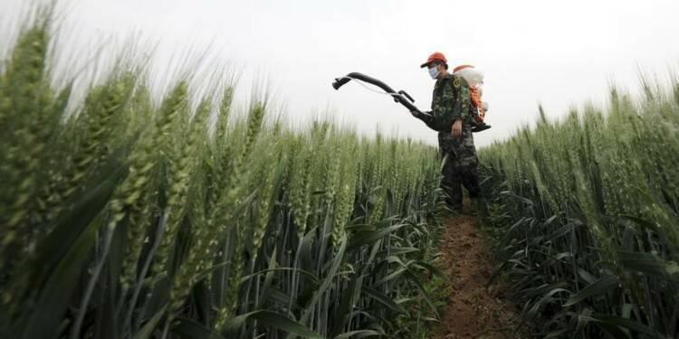 La pollution des terres agricoles s'aggrave en Chine