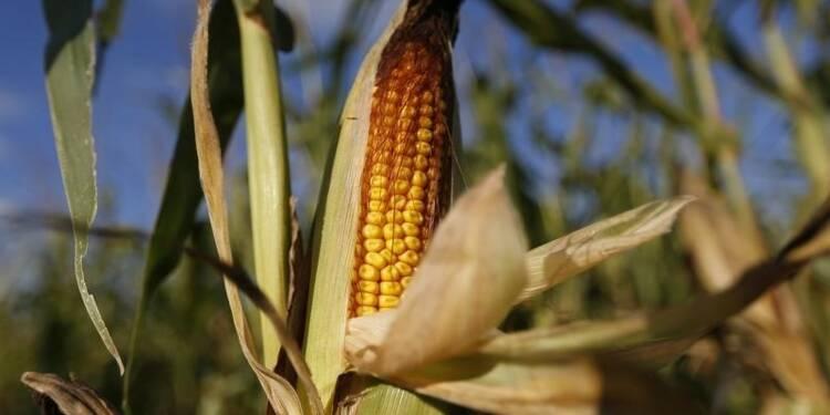 La France veut renforcer son moratoire sur le maïs OGM