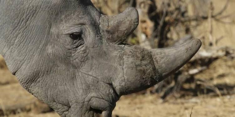 Mort de l'un des quatre derniers rhinocéros blancs du Nord