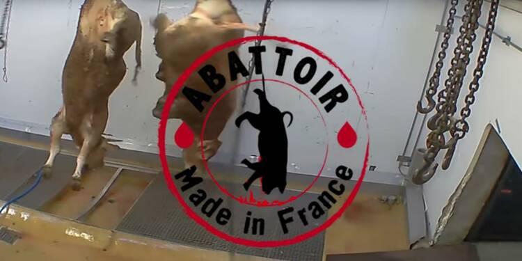 La vidéo insoutenable qui a conduit à la fermeture de l'abattoir d'Alès