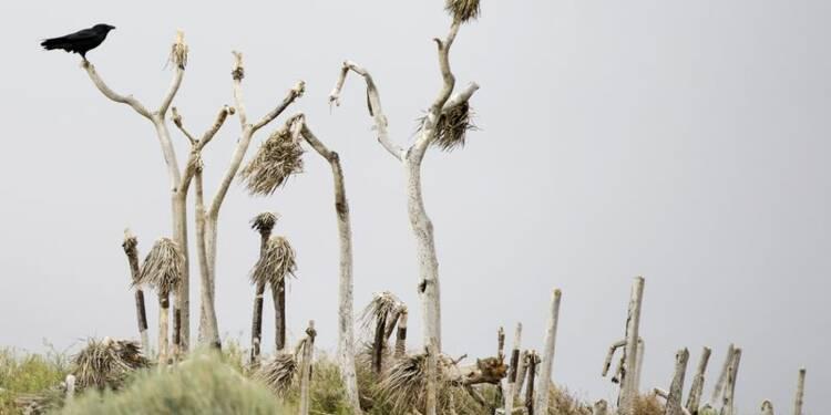 Les changements climatiques menacent une espèce sur six