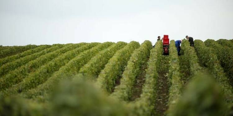 Les maladies menacent gravement le vignoble, selon un rapport