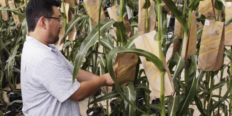 Les résultats de Monsanto meilleurs que prévu au 3e trimestre