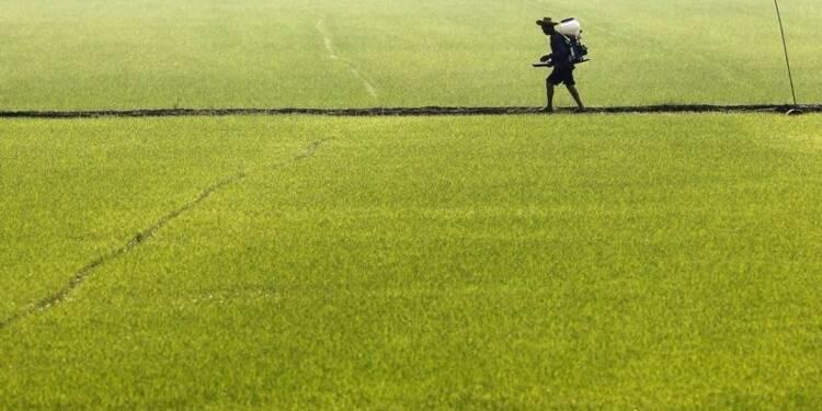DDT, lindane et 2,4-D jugés cancérogènes ou risqués par l'OMS