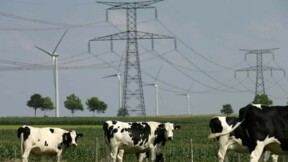 La filière bovine s'engage à revaloriser les prix
