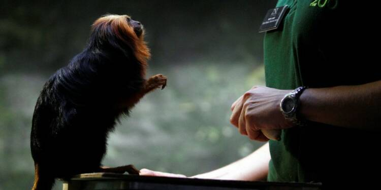 Vol de 17 singes rares au zoo de Beauval