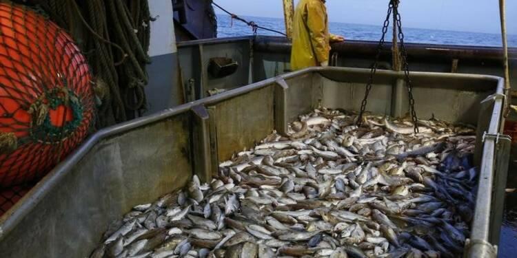 Deux fois moins de poissons dans les océans qu'en 1970