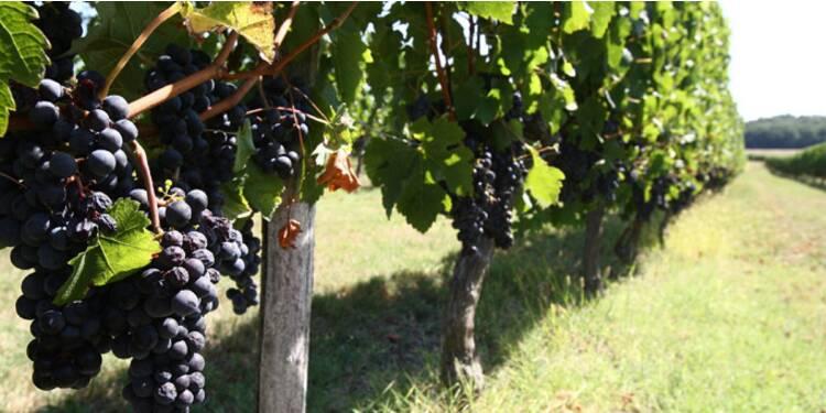 Investir dans les vins et vignobles