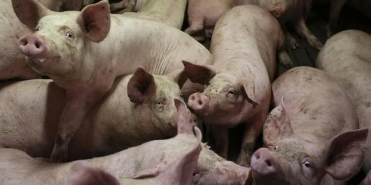 Le gouvernement s'efforce d'enrayer une guerre du porc