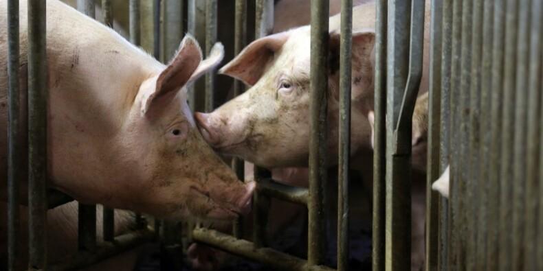 Crise du porc : réunion sous haute tension au ministère de l'Agriculture