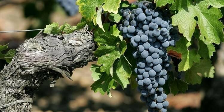 Dans le Bordelais, tout le monde peut créer son propre vin