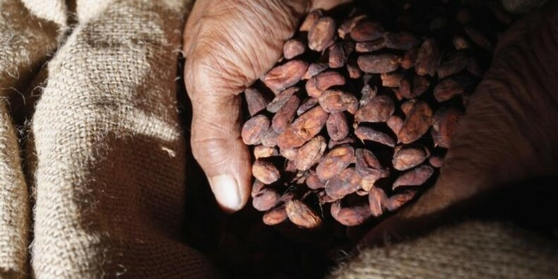 Le singapourien Olam se renforce dans le cacao