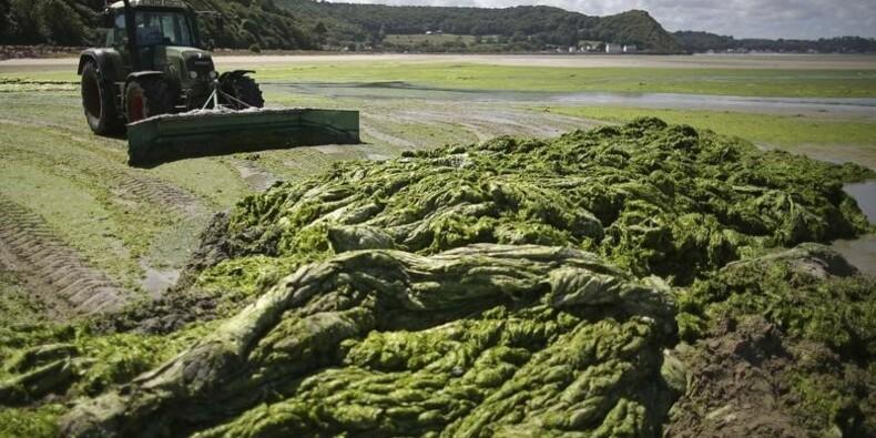 L'Etat responsable de la mort d'un cheval à cause d'algues vertes