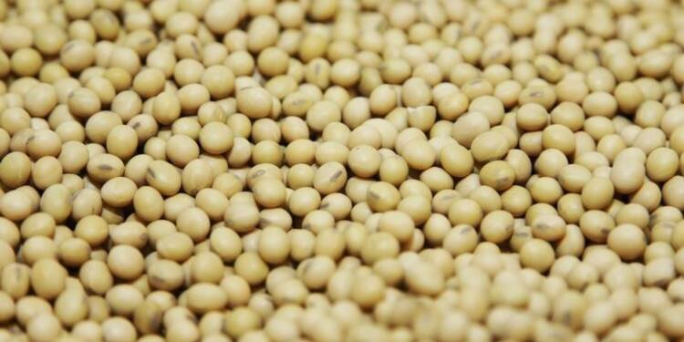 Le Parlement européen entérine l'accord sur les OGM