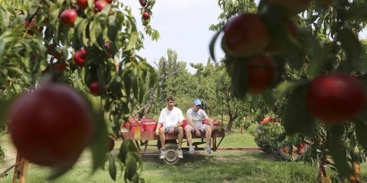 L'Europe promet 125 millions d'euros aux agriculteurs face à l'embargo russe
