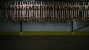 Les abattoirs normands AIM placés en redressement judiciaire