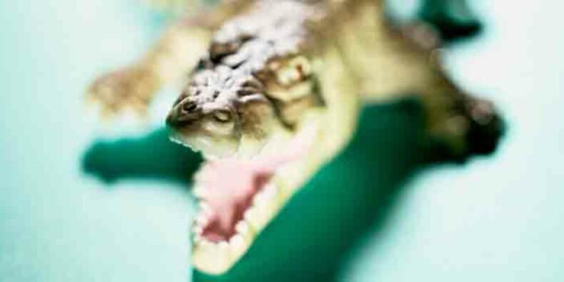 14 000 crocodiles ont failli envahir la France cet été