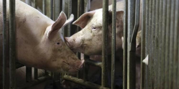 L'UE annonce une mesure de soutien aux éleveurs de porcs