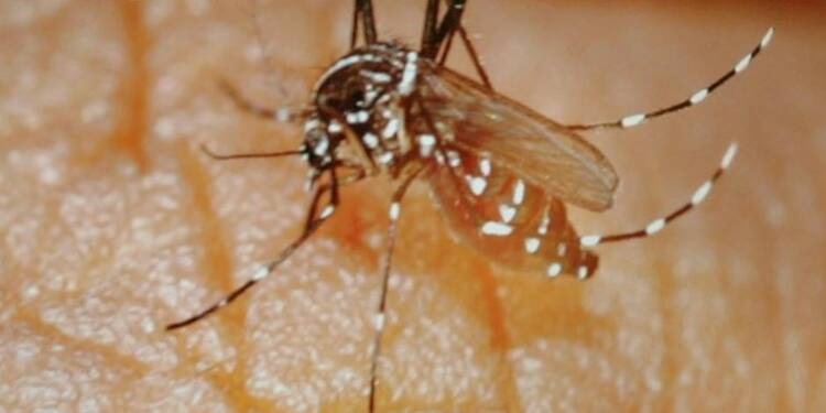 L'épidémie de chikungunya en Polynésie a provoqué 15 décès