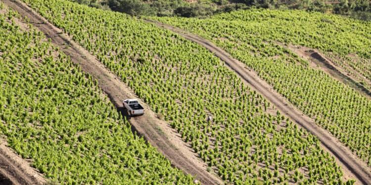 L'incroyable santé des vins du Languedoc Roussillon !
