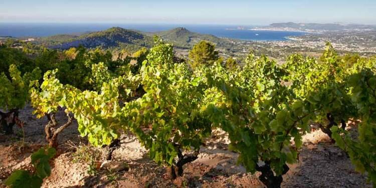 Les 10 bouteilles qui vont vous faire aimer (vraiment) le rosé de Provence