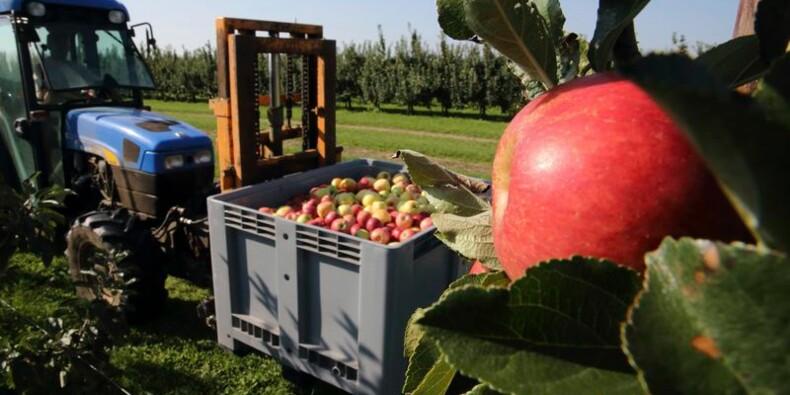 Le Foll confirme des aides aux producteurs de fruits et légumes