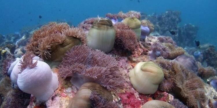 Près de 1.500 nouvelles créatures identifiées dans les océans