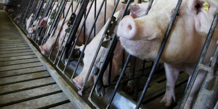 Une entreprise jugée responsable de la surdité d'un porcher