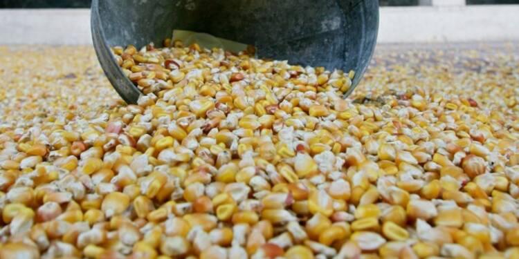 La France interdit par arrêté la culture du maïs OGM Monsanto 810
