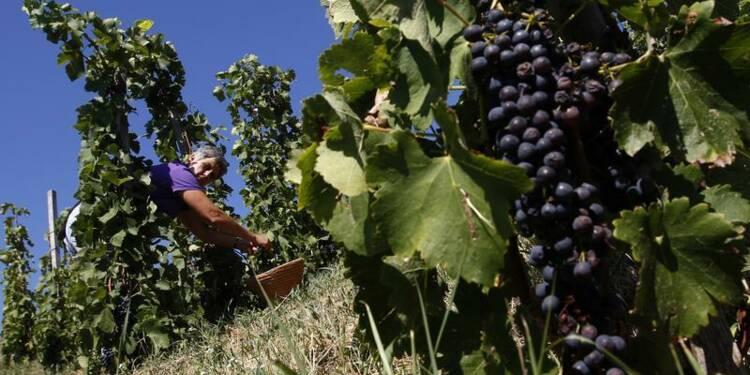 Un millésime 2013 rare mais bon pour le vin