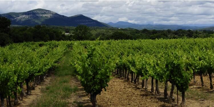 Investir dans les vignes : associer placement et plaisir