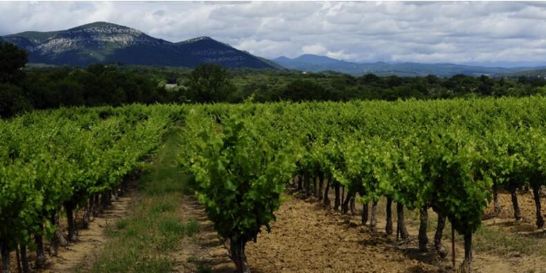 Faites fructifier vos rêves en louant un bout de vignoble