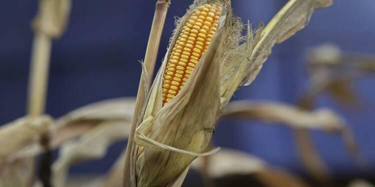 Le Conseil d'Etat suspend l'interdiction du maïs OGM MON810