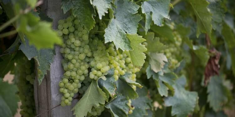 Les exportations de vins et spiritueux ont atteint un record en 2012