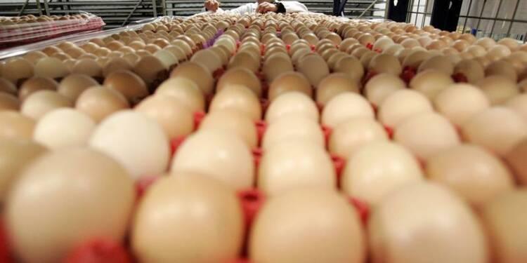 Face à la crise, les producteurs d'oeufs veulent exporter