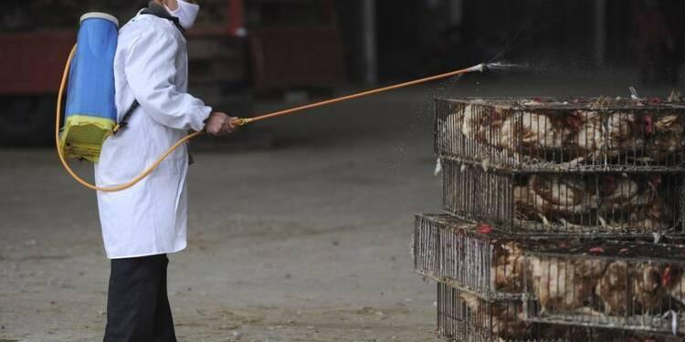 H7N9, un virus de la grippe aviaire redoutable, selon l'OMS