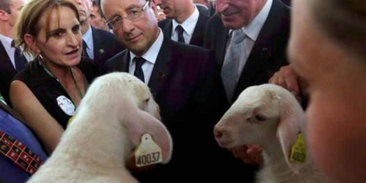 L'aide à l'élevage, priorité de la politique agricole
